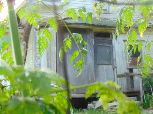 Creepy House Side Door 2 Trish Eklund PS