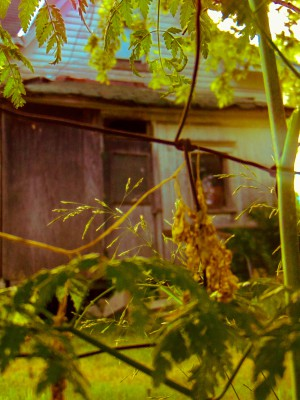 Creepy House Fence 2 Trish Eklund 1