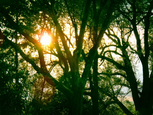 Follow the Light-Woods in Nebraska Bluffs-Eklund