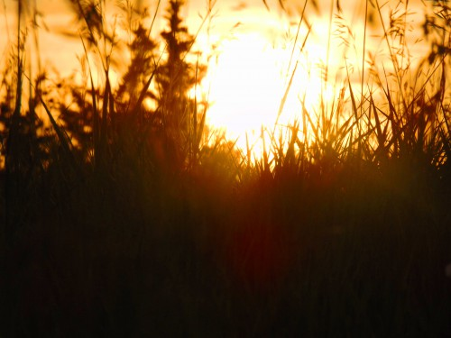 Sunset Grass 2 PS