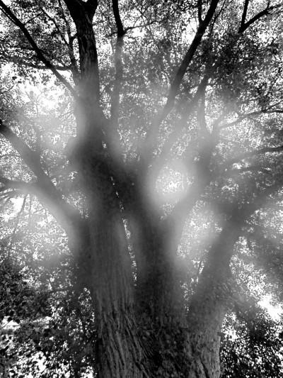 Tree Eklund B & W