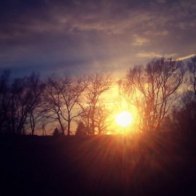Trees & Sunset