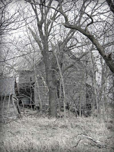 Through the Trees6-Eklund