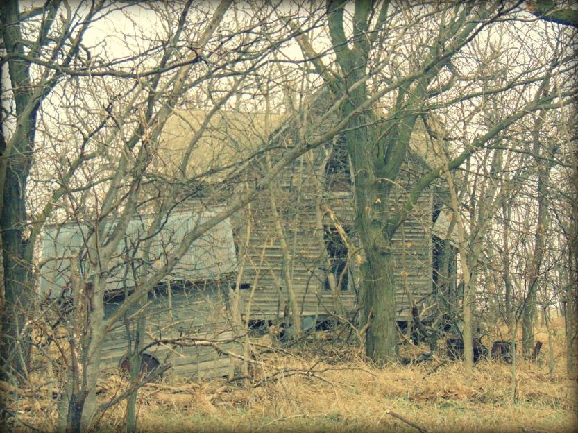 Through the trees7-Eklund.jpg